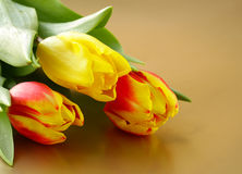 Easter spring flowers tulips Stock Photo