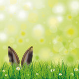 Easter Spring Hare Ears Grass Daisy Flowers Stock Photos
