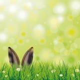 Easter Spring Hare Ears Grass Daisy Flowers Stock Photos