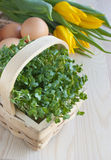Easter spring table, watercress salad, tulip flowers, eggs. Kitchen wooden table with spring yellow tulip flowers, eggs and water cress salad in a rustic basket royalty free stock photos