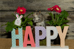 Easter Squirrel Royalty Free Stock Images