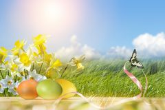 Easter still life with daffodils, colorful eggs and a butterfly royalty free stock photo