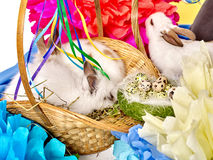 Easter still life with eggs and rabbit in basket. Stock Photography