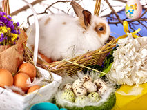 Easter still life with eggs and rabbit in basket. Stock Photos