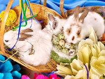 Easter still life with eggs and rabbit in basket. Royalty Free Stock Photo