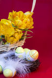 Easter still life of eggs and tulips Royalty Free Stock Images