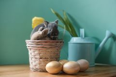 Easter still life with little rabbits in a basket. stock photo