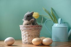 Easter still life with little rabbits in a basket. royalty free stock image