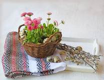 Easter still life with pink daisies and willow branches Royalty Free Stock Photography