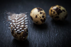Easter still life with quail eggs Royalty Free Stock Photos