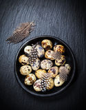 Easter still life with quail eggs Royalty Free Stock Photography