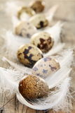 Easter still life with quail eggs and feathers. Stock Photo