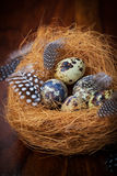 Easter still life with quail eggs Stock Image