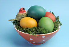 Easter still life with rainbow color eggs closeup against a blue background. Royalty Free Stock Photo