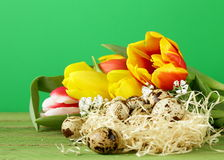 Easter still life with spring flowers tulips and quail eggs Stock Photography