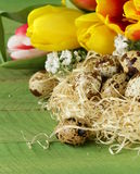 Easter still life with spring flowers tulips and quail eggs Stock Photo