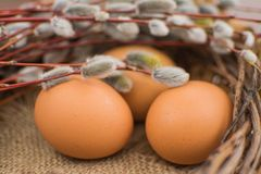 Willow twigs and natural eggs. Easter concept. royalty free stock images