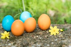 Easter sunday, happy easter, colorful easter eggs hunt holiday decorations easter concept backgrounds with copy space Stock Photography