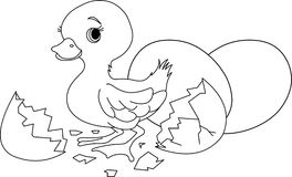 Easter surprise. Coloring page Stock Photography