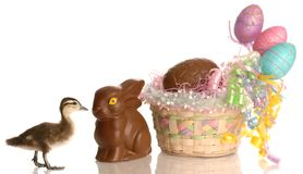 Easter Surprises Royalty Free Stock Images