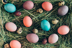 Easter surprises. Stock Images