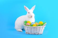 Cute bunny and basket of eggs on a blue