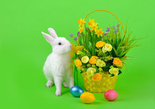 White bunny and basket of flowers on green Royalty Free Stock Photos