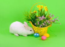 Fluffy  bunny and flowers on green Royalty Free Stock Images
