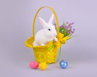 Cute white bunny in a basket with flowers and Easter eggs
