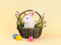 Fluffy  Easter bunny in a basket with flowers