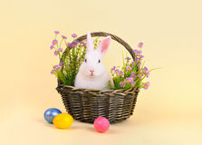 Easter bunny in a basket with flowers Royalty Free Stock Photos