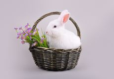 Fluffy white bunny in a basket with flowers