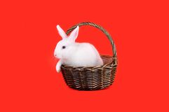 Cute white bunny in a basket on a red background
