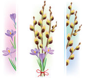 Easter symbols crocuses and pussy willow Stock Photography