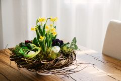 Easter table centerpiece decoration with daffodils and easter eg. Gs arranged in a rustic wreath made of tree twigs Royalty Free Stock Photo