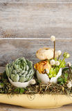 Easter table decoration with succulents and ranunculus flower Royalty Free Stock Image