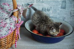 Easter theme  kitten sitting in large  woven cup and saucer Royalty Free Stock Images