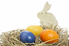 Easter theme with rabbit Royalty Free Stock Photos