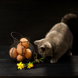 Easter themed cat photo. Stock Photo