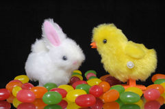 Easter time. A white wind up toy rabbit and yellow wind up toy chick stand among a field of brightly colored jelly beans Royalty Free Stock Image
