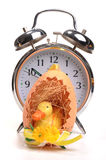 Easter time,. Photograph of an easter chick inside an egg and an alarm clock behind Royalty Free Stock Image