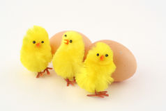 Easter time. Two real eggs and three toy chickens Royalty Free Stock Image