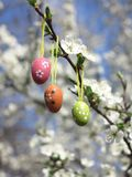 Easter Tree egg Stock Photography