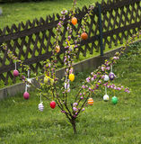Easter tree in the garden Royalty Free Stock Image