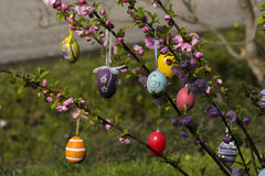 Easter tree in the garden Royalty Free Stock Images