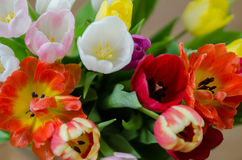 Easter Tulip Bouquet Stock Image