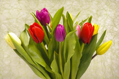 Easter tulip bunch Royalty Free Stock Images