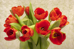 Easter tulip bunch Royalty Free Stock Photo
