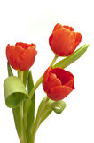 Easter tulip bunch stock photo