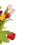 Easter tulips border Stock Photography